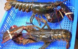 """Hải sản ngoại giảm giá khủng vì virus corona, dân """"nghiện"""" đồ biển sung sướng mua về ăn"""
