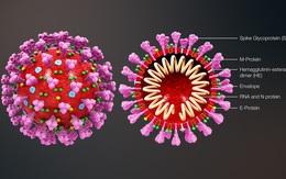 Công bố hai khóa học trực tuyến miễn phí về điều trị bệnh COVID-19