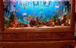 8 vị trí đặt bể cá cảnh sai phong thủy khiến gia chủ tổn tài, tán lộc, suy giảm vận may, sức khỏe