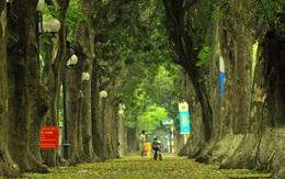 Ngắm vẻ đẹp tĩnh lặng của con đường phủ lá vàng Phan Đình Phùng khi Hà Nội giãn cách xã hội