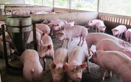 Doanh nghiệp chăn nuôi kêu khổ vì COVID-19, Hà Nội hứa tạo mọi điều kiện