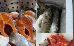 Cá hồi Sapa rẻ không thể tin được