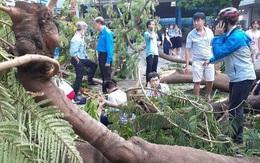 Clip: Khoảnh khắc cây phượng bật gốc đè học sinh trong sân trường