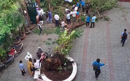 Học sinh tử vong do cây phượng đổ: Những loại cây nào không nên trồng trong trường học?