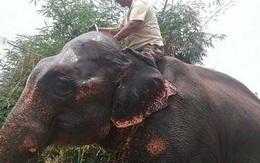 Người đàn ông 50 tuổi viết di chúc để lại 2,5 ha đất cho voi
