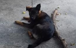 Thực hư vụ việc hai gia đình mâu thuẫn, kiện nhau lên tận tòa án tỉnh vì tranh giành quyền nuôi 1 chú chó