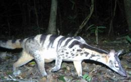 Phát hiện nhiều loài động vật cực kỳ quý hiếm ở Kon Tum