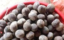 Quả rừng Sơn La hoang dại thơm ngọt giống phô mai tươi, bà nội trợ Hà thành liên tục đặt mua về làm sữa hạt, nấu canh