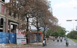 Hải Phòng: Hàng loạt cây xanh quanh tòa nhà đang xây bỗng chết héo khó hiểu
