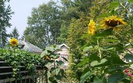 Khu vườn đủ loại rau quả đẹp như tranh của người phụ nữ trồng trọt từ năm 16 tuổi đến 63 tuổi
