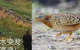 Đổ xô lên núi vì 'tiếng rồng khóc', ngàn người té ngửa khi thấy một con chim