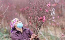 Nông dân trồng đào Nhật Tân 'đứng ngồi không yên' khi dịch COVID-19 bất ngờ bùng phát mạnh