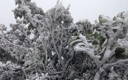 Không khí lạnh rất mạnh liên tiếp dồn về trong tháng đầu tiên của năm 2021