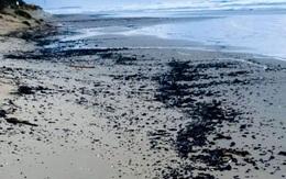 Xác cá voi, rùa biển đen sì bởi hàng chục tấn hắc ín trôi nổi trên biển tại Israel