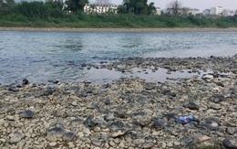 Nước sông Hồng bất ngờ đổi màu trong xanh như ngọc