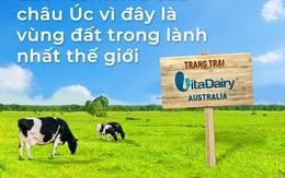 Trang trại bò sữa Việt Nam tại hòn đảo sạch nhất thế giới Tasmania, Australia