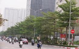 Ngắm những hàng cây bàng Đài Loan xanh mướt trên đường phố Hà Nội