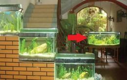 Đặt bể cá là rốn phong thủy trong nhà, lưu ý 3 điểm này đừng đặt bừa