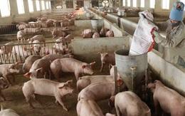 Giá lợn hơi chạm đáy, thịt lợn ở chợ và siêu thị vẫn 'đứng im'