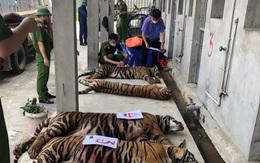 2 đơn vị đồng ý tiếp nhận 9 cá thể hổ thu giữ tại nhà dân ở Nghệ An
