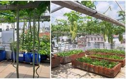 Mua hạt giống 10 nghìn đồng, bố Sài Gòn được vườn xanh mướt, mướp dài cả mét
