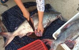 Tiết lộ về 5 đặc điểm của cá mà dù ế người bán hàng cũng không bao giờ cho gia đình ăn, chị em tuyệt đối không được mua