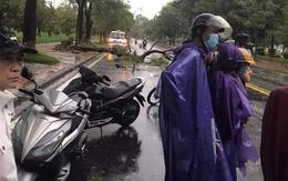 Làm rõ vụ nạn nhân tử vong do cây đè trong mưa bão bị lấy mất 30 triệu đồng