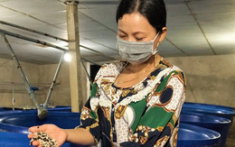 Cho giá đậu 'nằm bồn, ngủ máy lạnh' nữ nông dân kiếm 300 triệu đồng mỗi năm