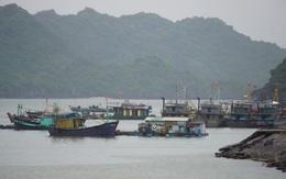 Hải Phòng, Quảng Ninh cấm biển, sẵn sàng ứng phó với bão số 7