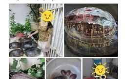 Tên Thuỷ Tiên và Công Vinh được khắc lên mai rùa phóng sinh, cư dân mạng chỉ trích vì hành động gây nguy hiểm tới loài vật này
