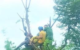 Người phụ nữ bị điện giật tử vong trên ngọn cây