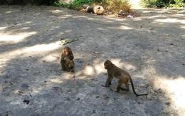 """""""Tiếp tế"""" hoa quả cho... đàn khỉ đói tràn xuống phố sau 3 ngày giãn cách ở Vũng Tàu"""
