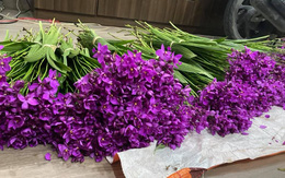 """Nông dân trồng hoa Hà Nội """"muốn khóc"""" khi hoa tươi chưa đến 500 đồng/bông"""