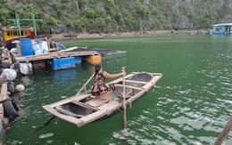 """Hải Phòng: Tháo bỏ lồng bè trên Vịnh Lan Hạ, ngư dân mong được """"giải cứu"""""""