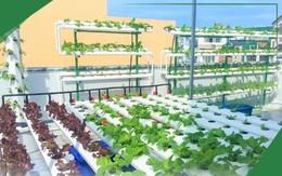 Dịch COVID-19 căng thẳng, giá rau tăng mạnh, người dân đua nhau mua giàn thủy canh về trồng