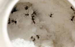 Kiến đang vào mùa hoành hành, chỉ bằng cách này lũ kiến sẽ không dám bén mảng đến gần lọ đường nhà bạn