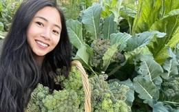 Người phụ nữ Việt ở Australia trồng cây trái khổng lồ trong vườn 1 ha