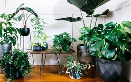 8 loại cây chị em không nên bỏ qua nếu nhà bí bách, không có nhiều ánh sáng nhưng vẫn muốn tạo không gian xanh