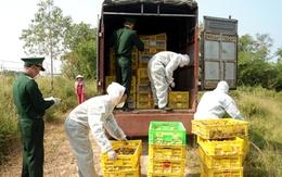 Quảng Ninh: Bắt giữ 2 vụ vận chuyển hơn 30 nghìn con gà giống nhập lậu