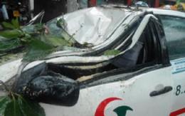 Cây đổ, người dân dùng xà ben cạy cửa taxi cứu tài xế và hành khách