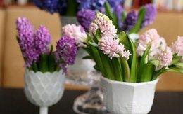 Cắm bình hoa tím lãng mạn chào tuần mới