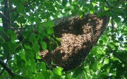 Hàng chục người bị ong chích tả tơi trong công viên