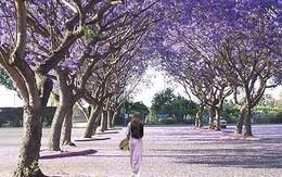 """""""Thâm cung bí sử"""" (58-6): Hoa không chỉ đẹp và thơm"""