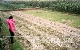 Một phụ nữ bị đánh bất tỉnh, lột sạch quần áo giữa cánh đồng