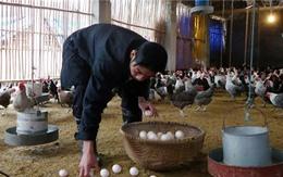 """Hết sốt giá đến """"khủng hoảng"""" thừa trứng gà"""