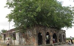 """Ngôi đình cổ """"độc nhất vô nhị"""" nằm trong lòng cây bồ đề"""
