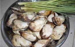 Đậm đà sò lông nấu sả