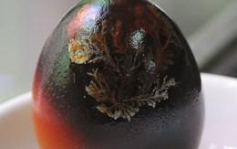 Xuất hiện cây lạ mọc trong quả trứng 2 màu