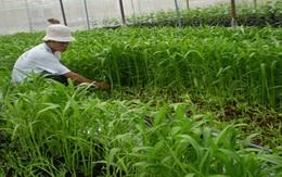 Choáng váng công nghệ trồng rau muống 'siêu tốc'