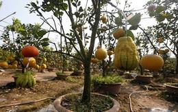 Cận cảnh vườn cây có 5 loại quả của lão nông Hà Thành